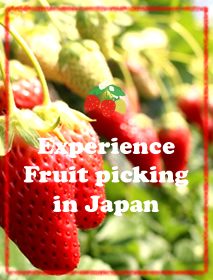 CultureExperience Fruit picking in Japan