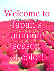 Welcome to Japan's autumn season of color!