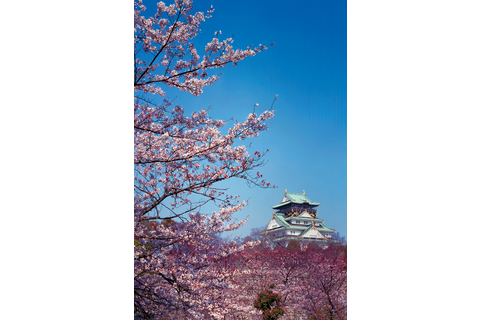 Among the cherry blossoms in Osaka Castle Park, the blossoms of about 600 cherry trees in Nishinomaru Garden, which is home to important cultural properties ...