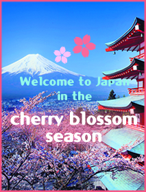 Welcome to Japan in the  cherry blossom season