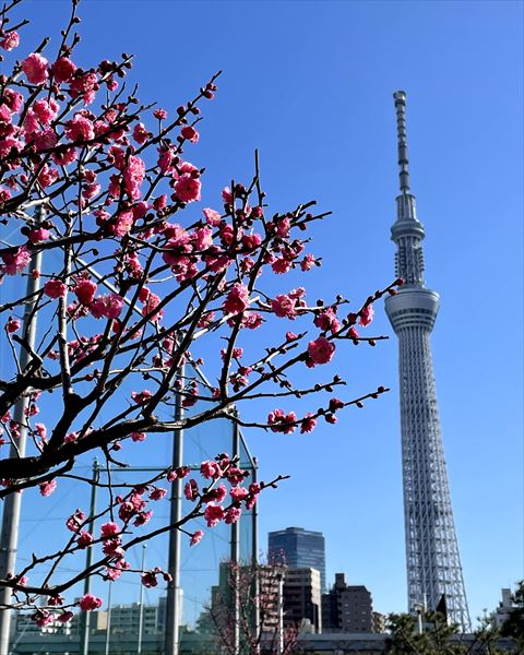 TOKYO SKYTREE view from Sumida Park