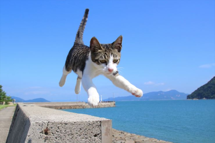 the Seto InlandThe cats of Sanagijima Island
