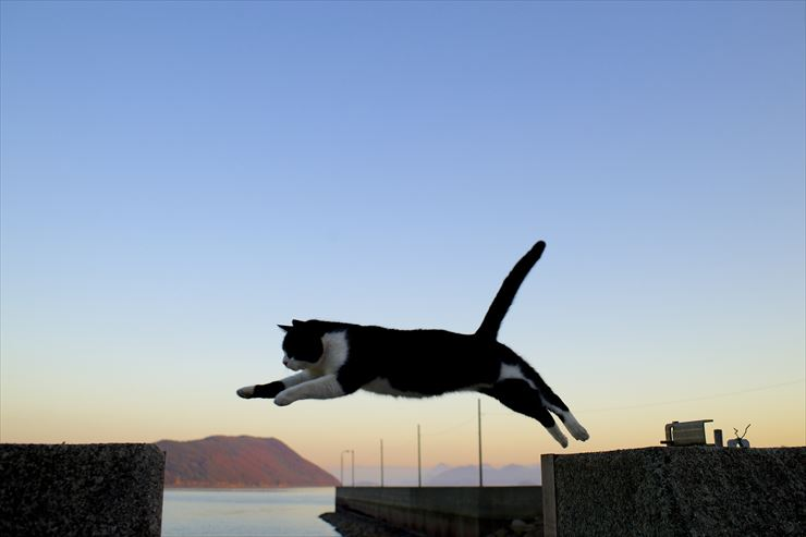 the Seto Inland The cats of Sanagijima Island